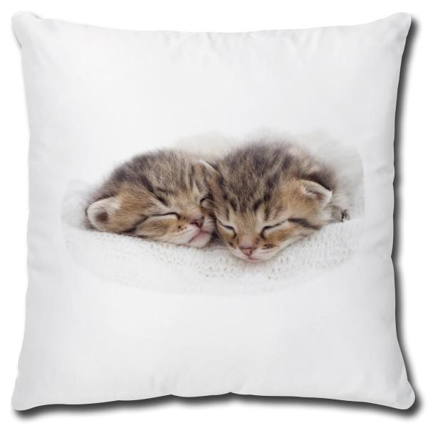 Katzen Nap Time, Kissen 40x40 cm