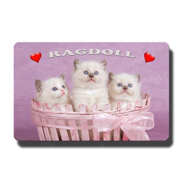 Ragdoll Kätzchen, Magnet 8,5x5,5 cm