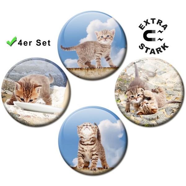 Magnete für Glasmagnettafel 4er-Set Katzen-Siesta - Ø 5 cm