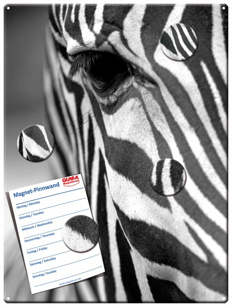 Magnettafel 40x30 cm Zebra inkl. 4 Magnete