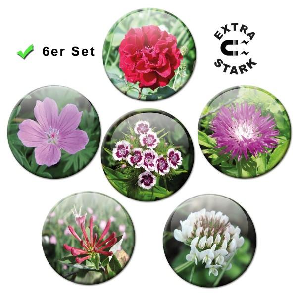Blütenzauber, Glasmagnettafel Magnete 6er-Set Ø 5 cm