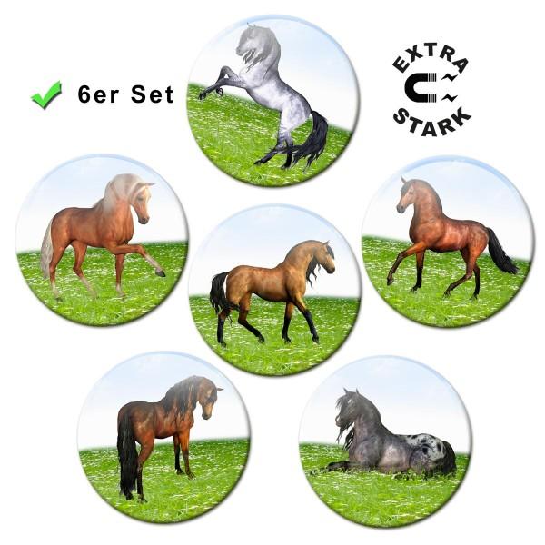 Pferde auf der Wiese, Glasmagnettafel Magnete 6er-Set Ø 5 cm