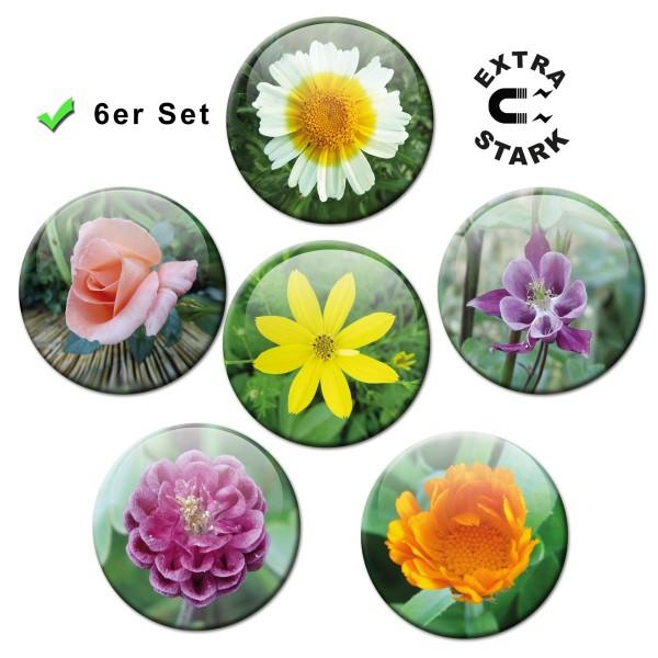 Blumenpracht, Glasmagnettafel Magnete 6er-Set Ø 5 cm