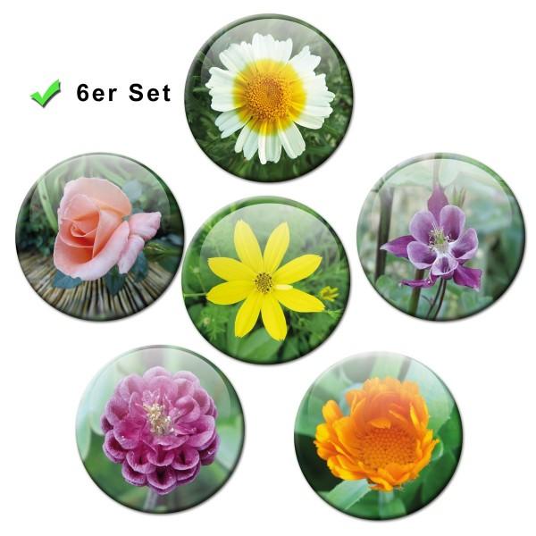 Blumenpracht, Kühlschrankmagnete 6er-Set Ø 5 cm